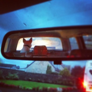 Escorting a lost dog into the sunset