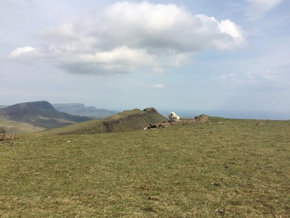 local sheep oblivious to said steep drops